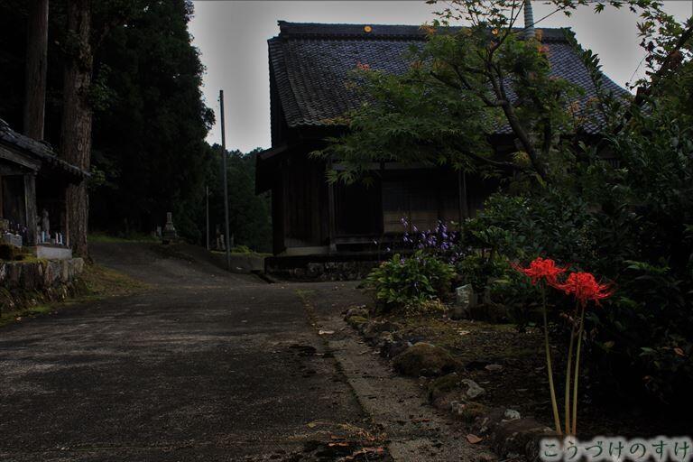 西蓮寺に咲く彼岸花