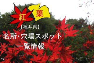 福井県紅葉一覧